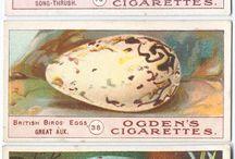 The Egg / Eggy beauty