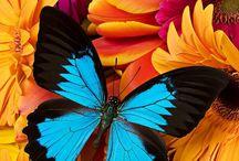 Beauty ''Flies''... Butterflies / Butterflies are the heaven sent kisses of an angel.