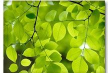 Healing colours GREEN / Be green