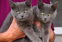TheCatSite.com's Picture Of The Week Winners / Once a week we pick up the best photo submitted by members across the site. Enjoy!