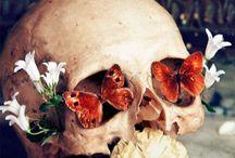 Beautiful Horrors  / by Serene Fairbanks