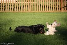 Pets / by Virginia Bulluck