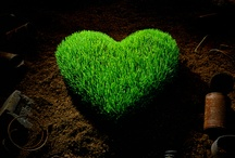 Ecofriendly love / by ReWall
