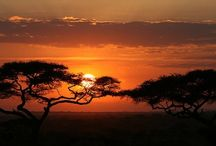 African Safari / Photos of African safaris we <3 (taken from our luxury African safari guide: http://qosy.co/african-safari-guide/)
