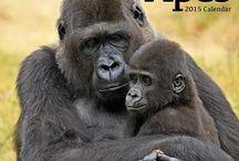 2015 wildlife calendars / by MegaCalendars.com