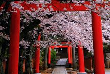 Kiotó
