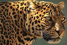 Varawal Leopard / a leopard camp