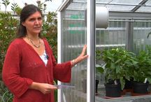 PLEXIGLAS® Greenhouses / PLEXIGLAS® is perfect for Greenhouses! High light transmission and UV transmission for the best growth results, protection from hail, energy saving of up to 60 %, patented anti-condensation technology, stability and performance in use, savings on accessories, longvity, environmental protection and the best guarantees in the industry!