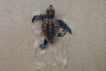 Turtleeees ❤️
