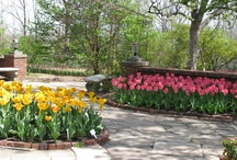 Spring in Topeka / Topeka is beautiful in the spring which is why many people come to visit the Capitol City of Kansas during this time. Enjoy beautiful weather, flowers, nature and much much more! Visit Topeka in the spring!  www.VisitTopeka.com