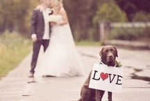 Wedding Details: Puppy Love / For all of the dog lovers out there! Here are sweet ways to include your dog in your wedding.  / by Elli