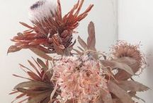 dried flowers/plants