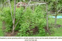 The Incredible, Edible Yard / by Brooke Brewer