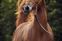 Лошади ✨
