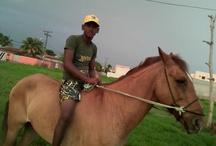 Cavalos / Tudo relacionado a montarias, cavalgada e animais.