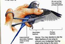 Bird etc.