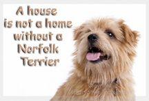 Norfolk love