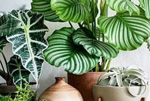 φυτα εσωτερικου χωρου