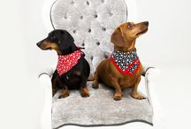 Pet Portrait Photography / Pet Portrait Photography Exclusive Photography www.exph.com.au