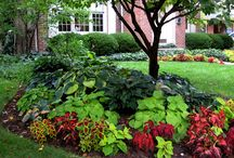 Flowers,composting,landscaping  / I just love flowers / by Glennus Gerwing