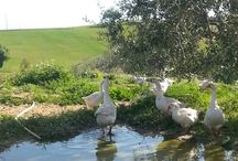 Strolls around Pian del Noce / about what you can see strolling in the neighbourhood