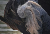 Fresian horses