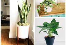 plants for inside the home.