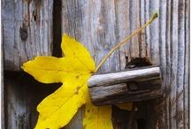 Autumnal Awe / by Daniel Christensen