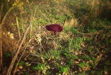 Lost and found / Verloren en gevonden voorwerpen onderweg