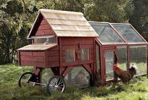 Project Ideas - Chicken Tractor