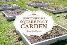 Cheap Gardening Secrets / Cheap gardening tips and hacks to help you get the very best from your garden for less. If you would like to be a contributor on this board please message me. Contributors please pin your content and repin another contributor's pin to another board and share. Please do not raid or spam the board, you will be removed.