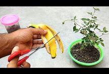 fertilizers for plants
