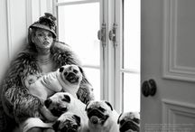 Pug Glam / Because there is nothing more glamorous than pugs... really.