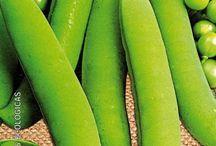 Productos Ecológicos / Productos 100% ecológicos y naturales. Semillas, frutas, hortalizas, zumos, confituras y mermeladas.