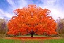 Arancione!!!