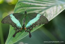 Exotic Butterflies / Beautiful exotic and tropical butterflies.