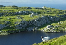 The Sheep's Head Peninsula / The Sheep's Head peninsula is an EDEN destination - a European destination of excellence - in beautiful West Cork. Enjoy great food, company, walks, crafts and scenery when you live the Sheep's Head Way ...