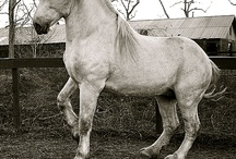 Draft horses / by Luanna Parker