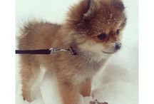 Dogs I Want