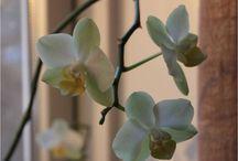 Blomster inde