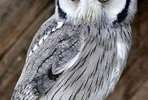 sova sovi ze sovina.. owl from owland / takovy maly sovi raj.. owl eden