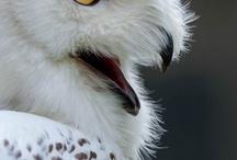 Owls (a.k.a. hedwigs)  ~_•