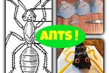 bogarak,állatok