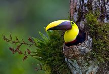 Nature / Birds, animals plants and insects / by Rost