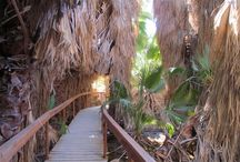 Travel Palm Springs / enjoy the warmth and fun in Palm Springs.