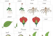 Teaching botany with Montessori