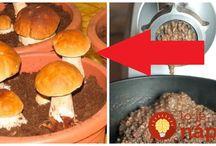 Pěstování hub