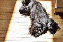 Scotties! Best doggies in the world! / by Elizabeth Lawrence