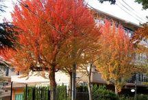 közterületi fák légvezeték alá