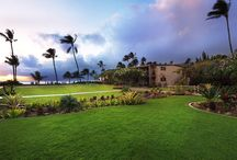 The Mauian / Pins from our beachfront property on Napili Bay in Maui.  / by The Mauian
